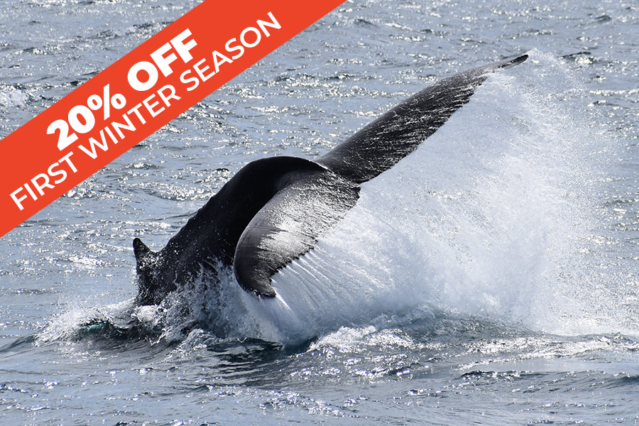 Wilsons Prom Whale Adventure Cruise