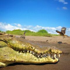 Carara National Park and Tarcoles River Crocodiles Boat Tour