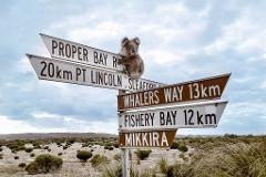 1-Day Port Lincoln Tour