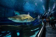 Museu do Amanhã, AquaRio e Boulevard Olímpico - Estrangeiros