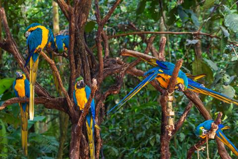Iguassu - Bird Park (From Argentina)