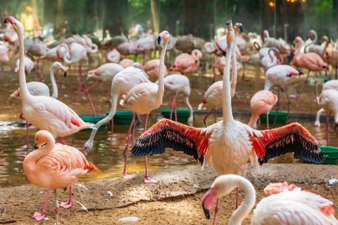 06_Bird_Park