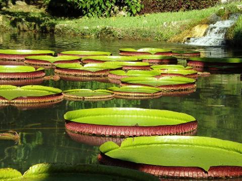 07_Jardim_Botanico