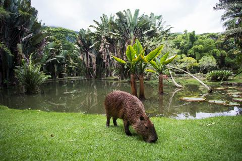 Bosque de Tijuca y Jardín Botánico