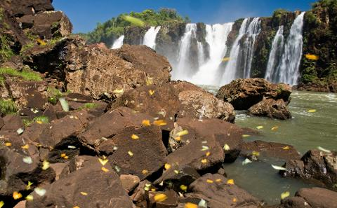 09___Borboletas___Parque_Nacional_Igua__u