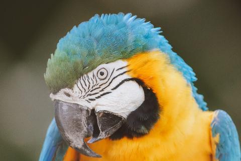 Rio Animal Tour: BioParque do Rio y AquaRio - Extranjeros