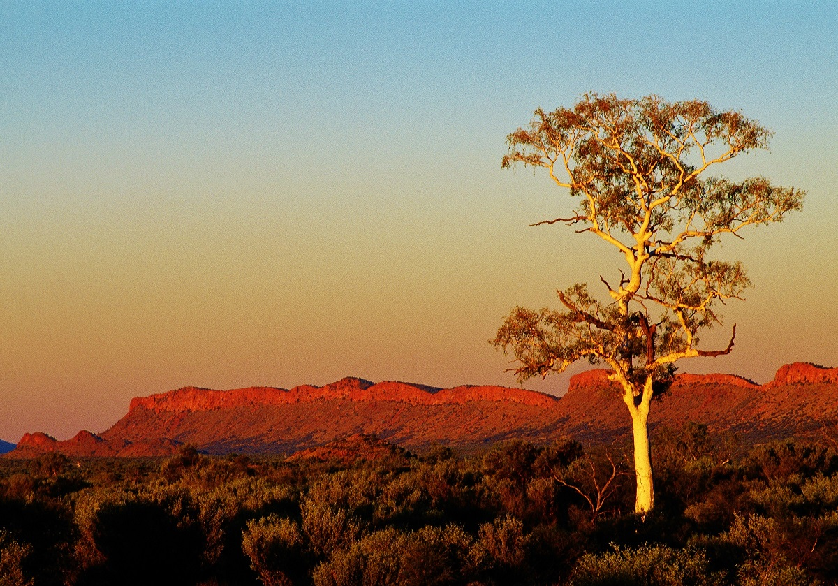 1 Day West MacDonnell Ranges Tour