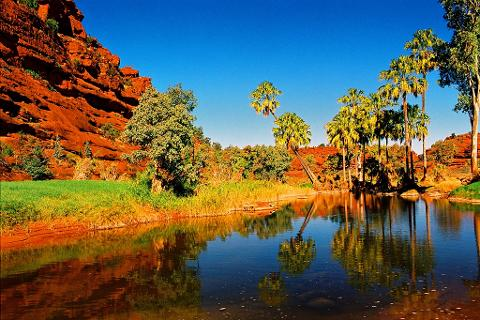 1 Day Palm Valley Tour