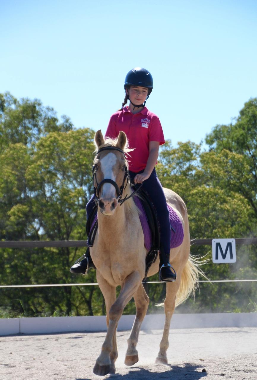 Farm Animal & Horse Ride Experience (Package)