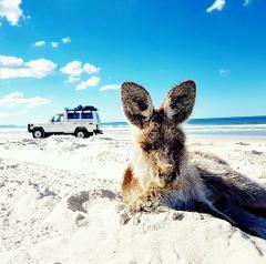 Bribie Island 4X4 Adventure tour (Sunshine Coast Pickup)