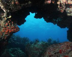 2 Tank Scuba Dive - 5 Day Package