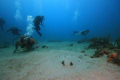 2 Tank Scuba Dive - 4 Day Package