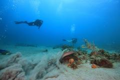 2 Tank Scuba Dive - 3 Day Package