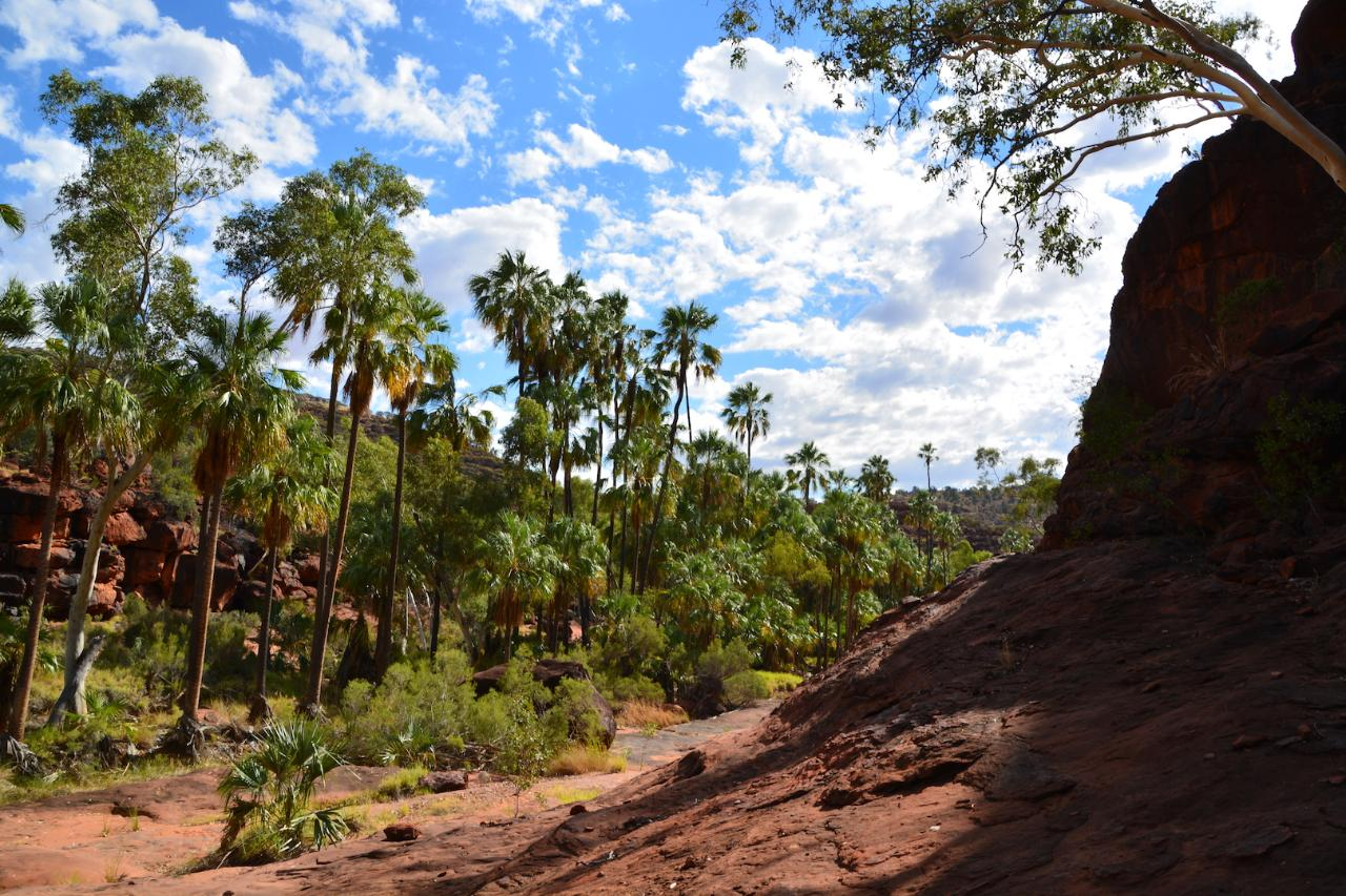 Palm Valley and Hermannsburg 1 Day 4WD Tour