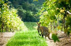 Hunter Valley Ultimate Food & Wine Trail - Private Day Tour