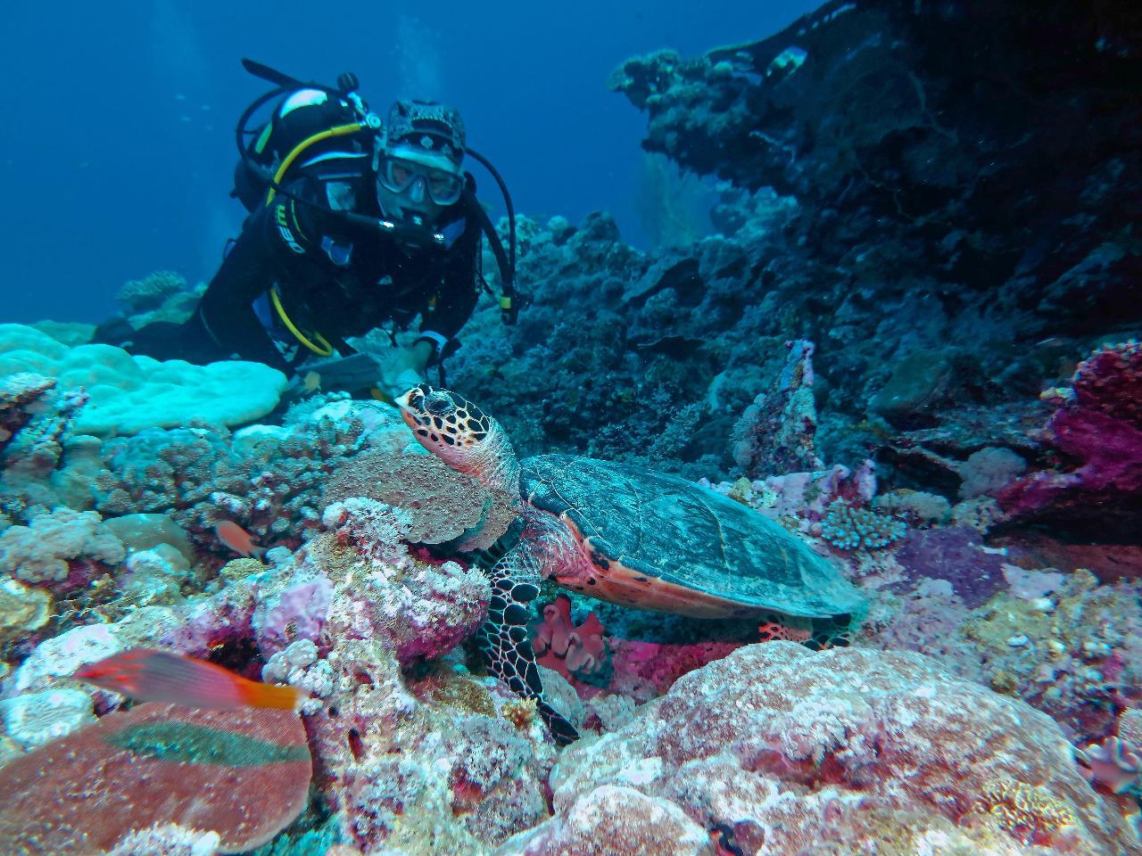 The Muiron Islands Snorkel