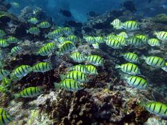 The Ningaloo Reef