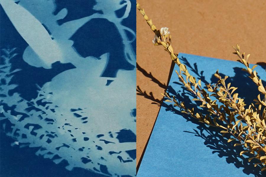 Botanical Sun Prints