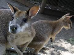 All Aussie Adventure Wildlife and River Cruise
