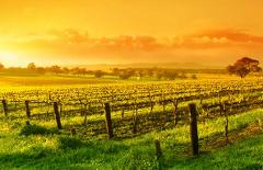 Barossa Valley - Amazing Day Tour