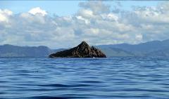 SUP Day - Karewa Island