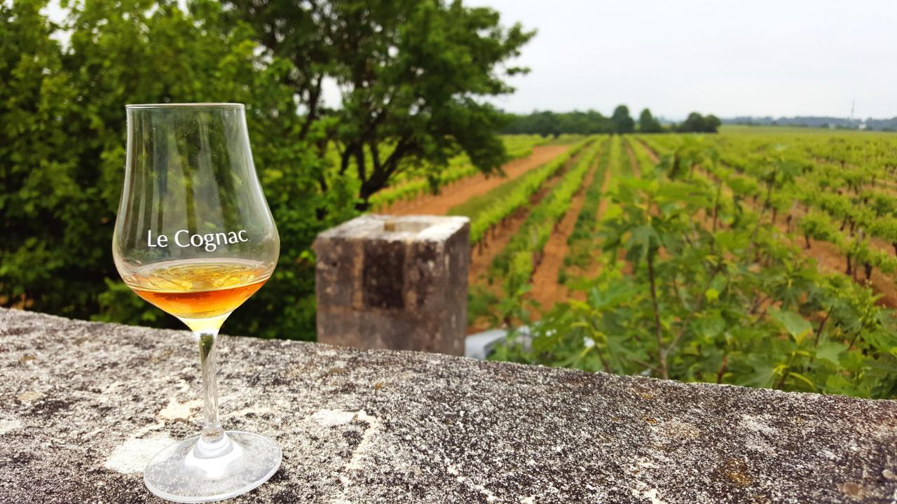 Standard Day tour from BORDEAUX - Cognac distillery, Bordeaux winery and wine workshop