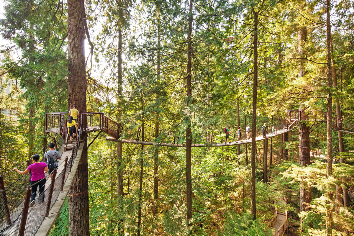PRIVATE TOUR: CAPILANO BRIDGE & GROUSE MOUNTAIN