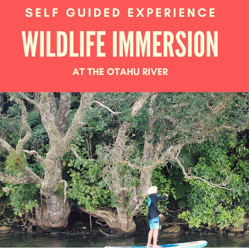 WILDLIFE EXCURSION ON THE OTAHU RIVER - SELF GUIDED