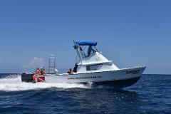 Private Tour Boat Bertram 31ft