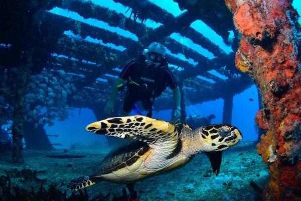 Private Adventure Diving