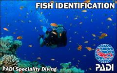 PADI Specialty Course - Fish ID