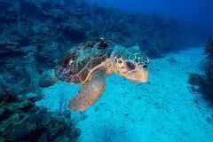 Caye Caulker Marine Reserve