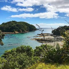 Marine Life Tour Only (no Clearyak or Snorkel) - pick-up Auckland