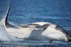 Whale Watch Gift Voucher