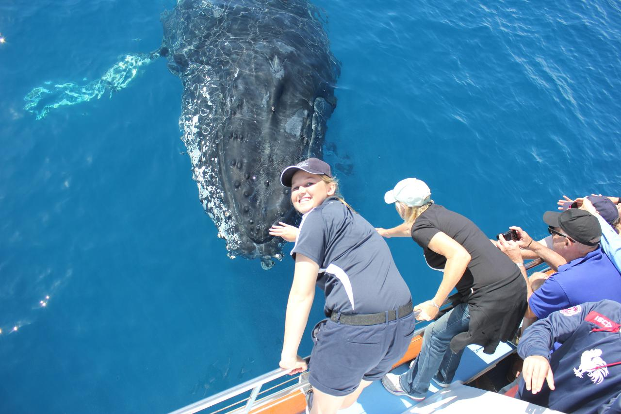 Premium Whale Watch tour for 2