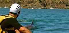Private Byron Bay Sea Kayak Tour