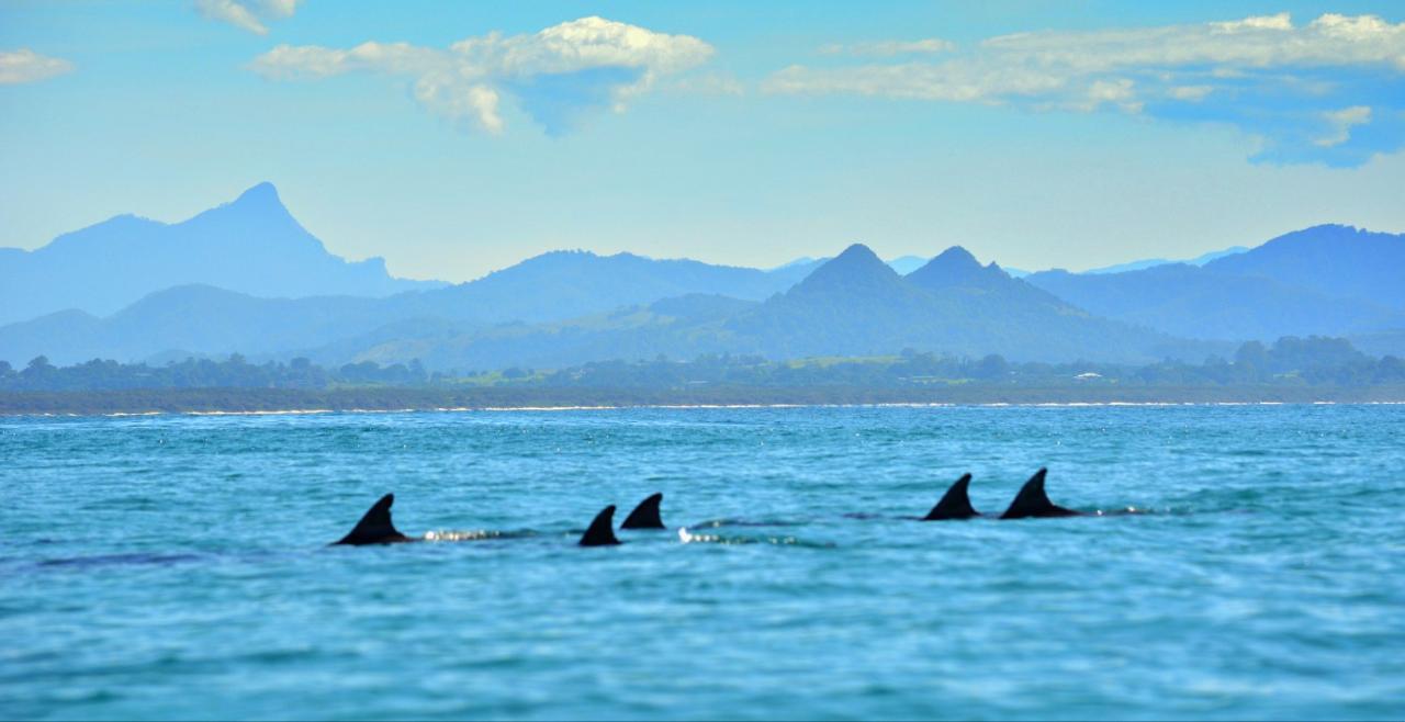 Live Virtual Byron Bay Dolphin Sea Kayak Tour