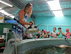 Sea Turtle Hospital Tour