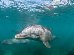 Half Day Dolphin Watching Cruise
