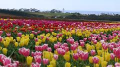 Springtime Tasmania