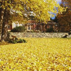 Gardens of Monaro & Bright Autumn Festival