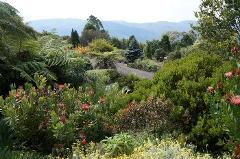 Bilpin & Mt Tomah Botanic Gardens with Graham Ross