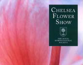 England and Chelsea Flower Show