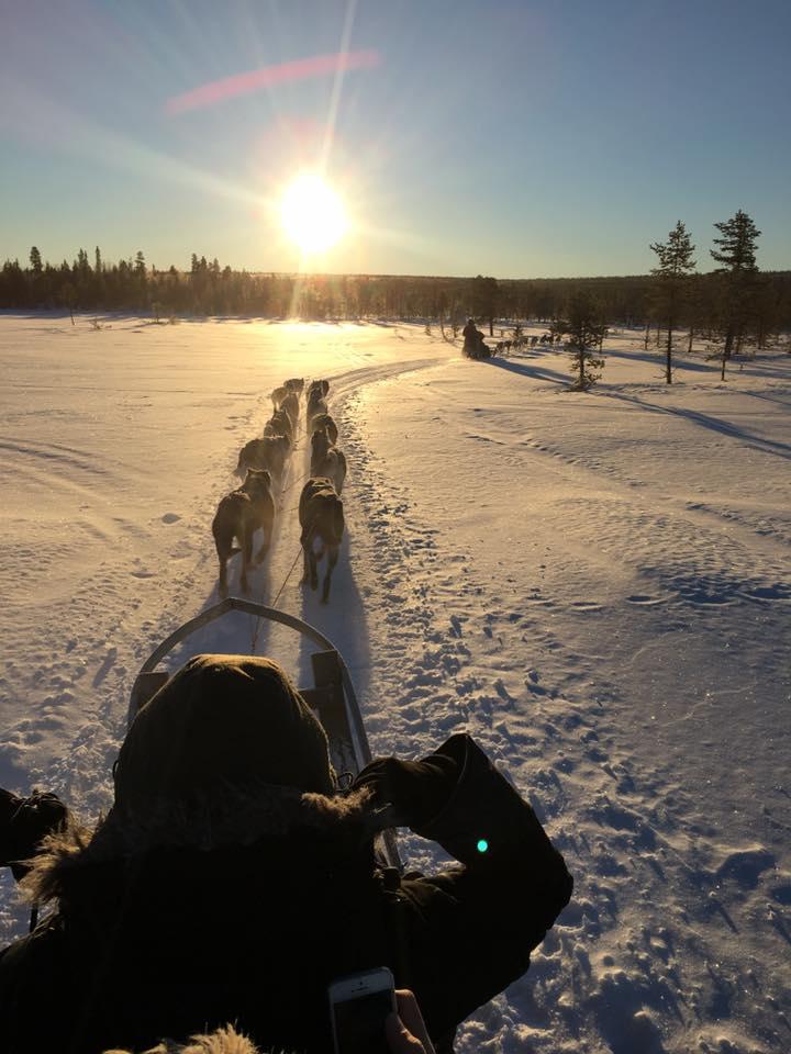 Abisko - Winter Wonderland Dogsledding