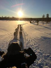 Abisko - Winter Wonderland Dogsledding