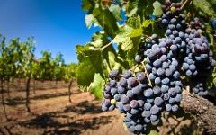 ALENTEJO WINE TOUR (WITH LUNCH INCLUDED)