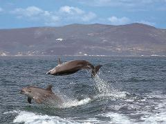 COOL ARRÁBIDA FULL DAY TOUR - (WITH DOLPHIN WATCHING)