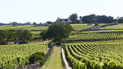 Burgundy Experience in English