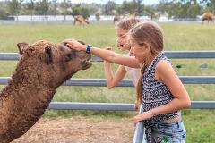 Camel Farm DELUXE Experience