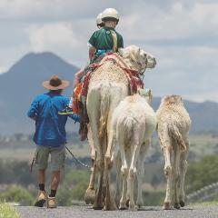 Camel Trail Rides
